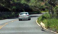 Flagrante de cão sendo abandonado pelo dono em uma rodovia.