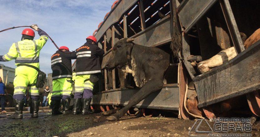 caminhão-com-bois-tomba-na-br381-03