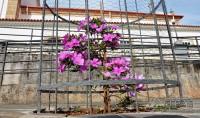 flores-do santuario-da-piedade-01