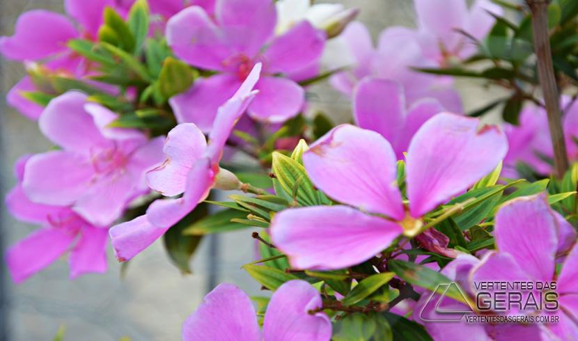 flores-do santuario-da-piedade-04pg