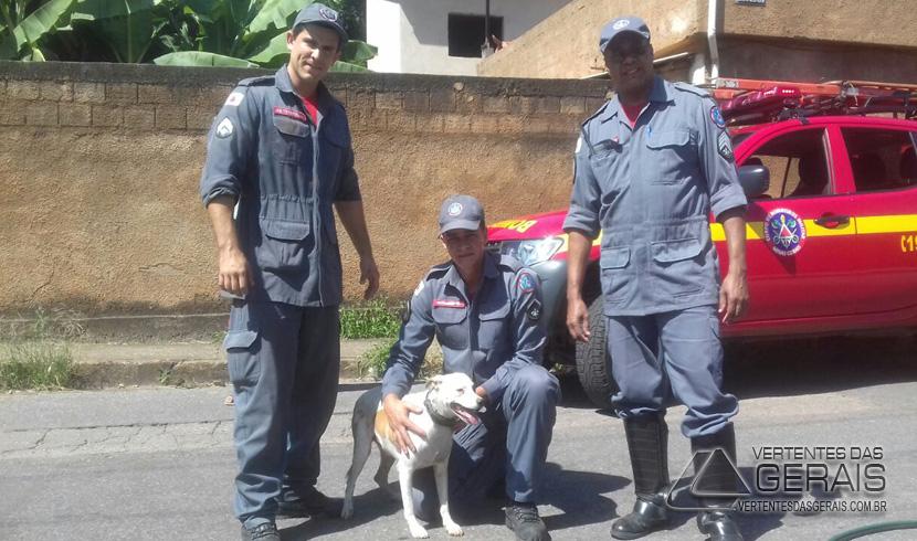 CÃO É RESGATADO POR BOMBEIROS DEPOIS DE FICAR PRESO EM BUEIRO