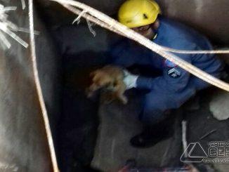 resgate-de-cadela-02jpg