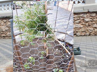 Vândalos-destrói-muda-de-árvore-no-entorno-do-santuário-da-piedade-01