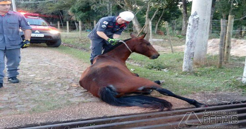 bm-de-lafaiete-resgata-animal-em-situação-de-risco-02