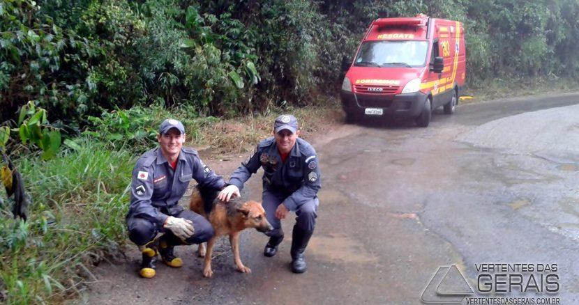 bombeiros-realizam-salvamento-de-cão