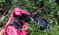 bombeiros-regatam-cadela-e-filhotes-em-local-de-difícil-acesso-em-barbacena