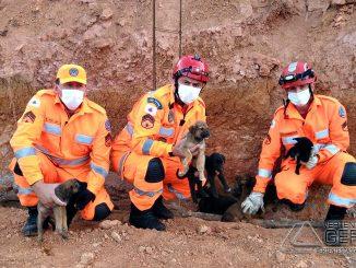 bombeiros-resgatam-cadela-com-13-filhotes-em-local-de-dificil-acesso-em-barbacena-01