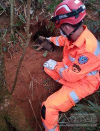 bombeiros-resgatam-cadela-com-13-filhotes-em-local-de-dificil-acesso-em-barbacena-02