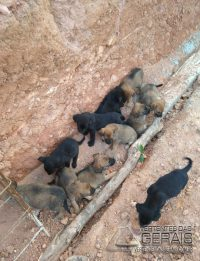bombeiros-resgatam-cadela-com-13-filhotes-em-local-de-dificil-acesso-em-barbacena-03