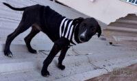 cães-pára-adoção-01