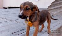 cães-pára-adoção-02