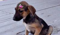 cães-pára-adoção-03jpg