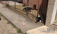 cão-fica-preso-em-gradil-01