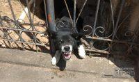 cão-fica-preso-em-gradil-02