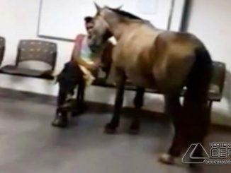 cavalo-em-posto-de-saude