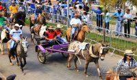 desfile-sete-setembro-congonhas-18