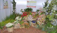 encerramento-da-festa-das-rosas-de-2017-em-barbacena-foto-januario-basílio-vertentes-das-gerais-28pg