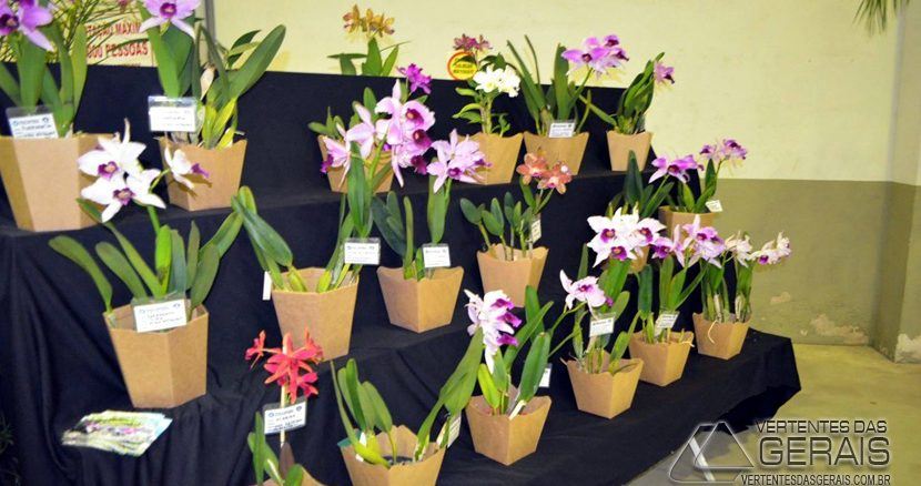 exposição-de-orquídeas-em-alfredo-vasconcelos