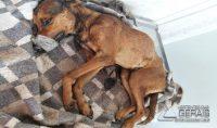 resgate-de-cão-em-alfredo-vasconcelos