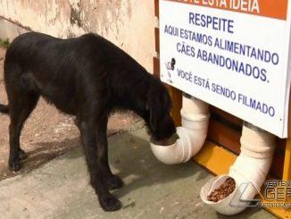 deia de restaurante para cães fez sucesso em Pouso Alegre (MG). (Foto: Reprodução/EPTV)