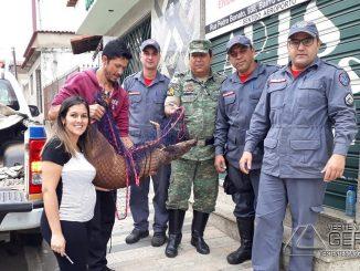 veado-campeiro-resgatado-dentro-de-residencia-em-barbacena-mg-02